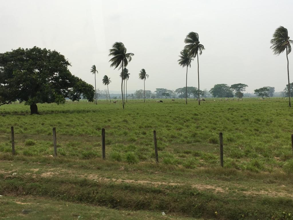 ベリーズ グアテマラの国境までの風景