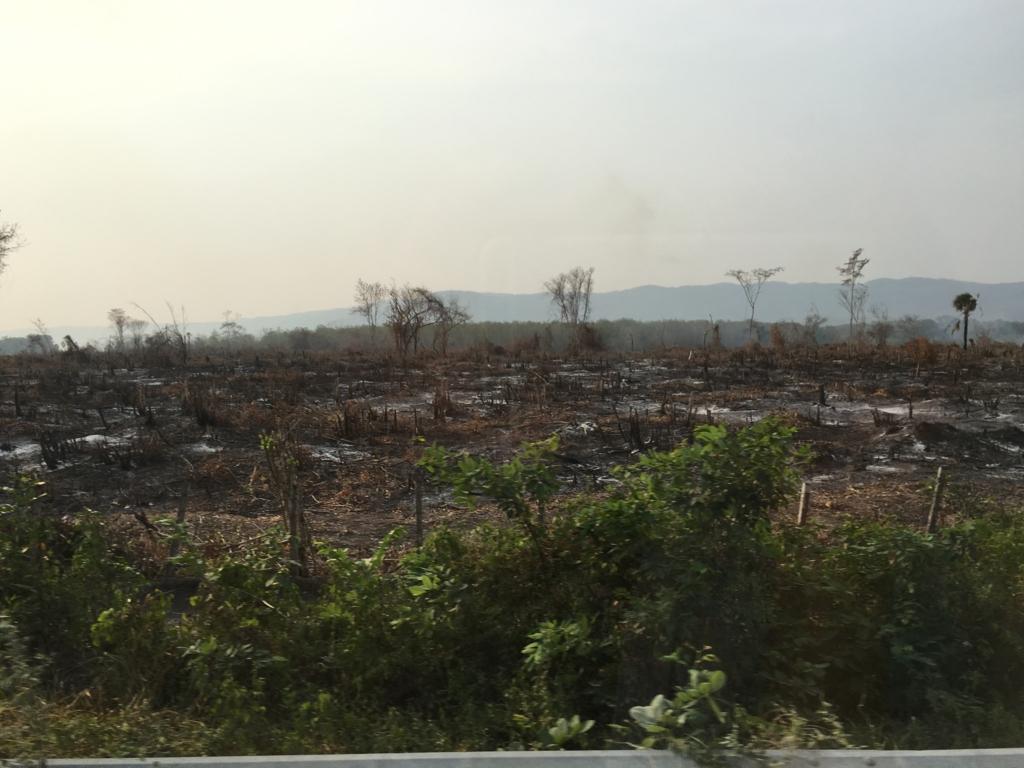 グアテマラ ベリーズ国境付近 焼き畑