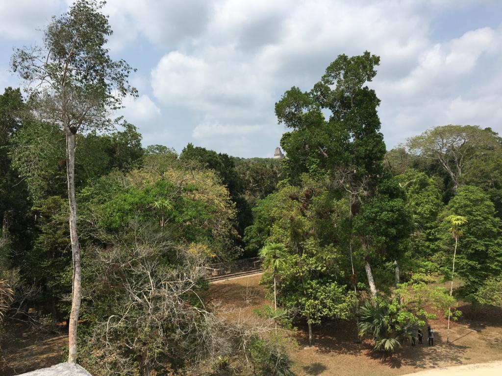 ティカル国立公園 双子のピラミッド コンプレックスQ 頂上よりジャングル