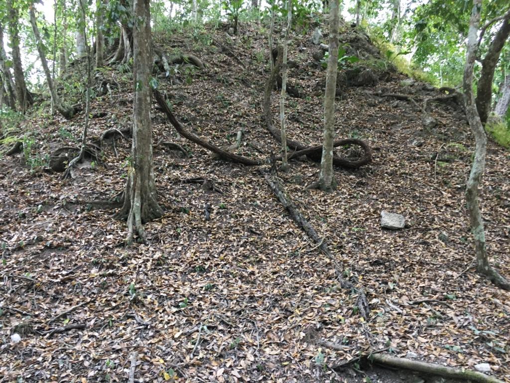 ティカル国立公園 コンプレックスR 発掘前の山