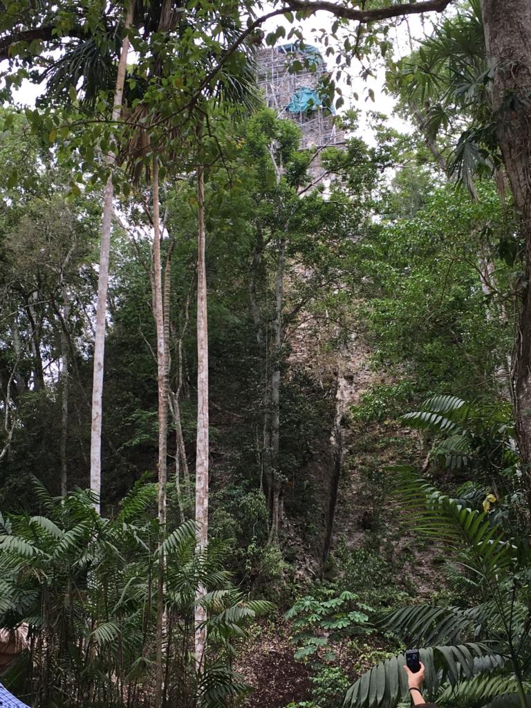 グアテマラ ティカル国立公園 修理中の3号神殿