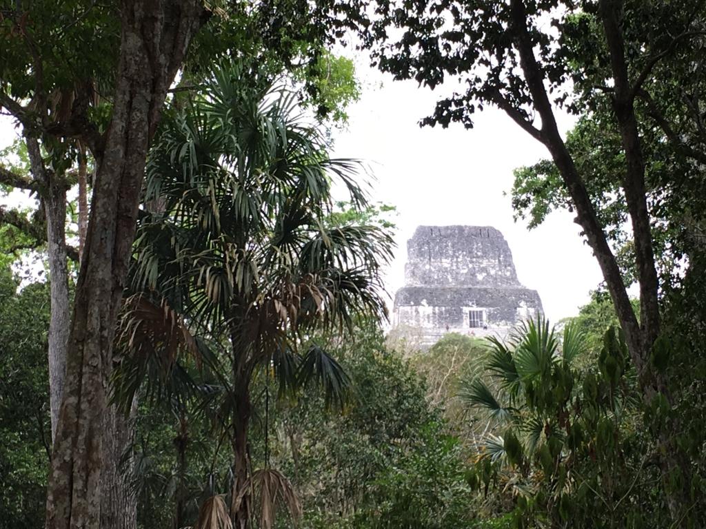 グアテマラ ティカル国立公園 4号神殿 遠望