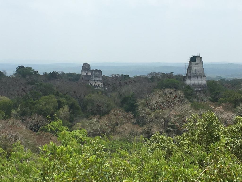 グアテマラ ティカル国立公園 4号神殿 頂上からジャングルの遺跡写真