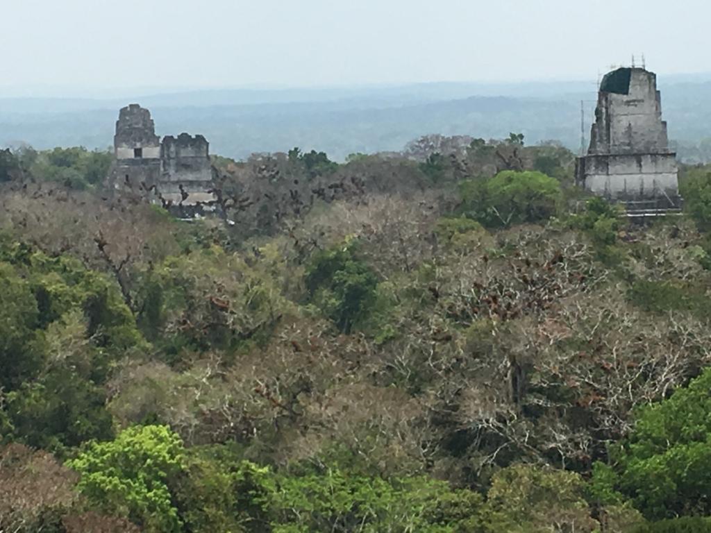 グアテマラ ティカル国立公園 4号神殿 頂上からジャングルの遺跡写真 拡大