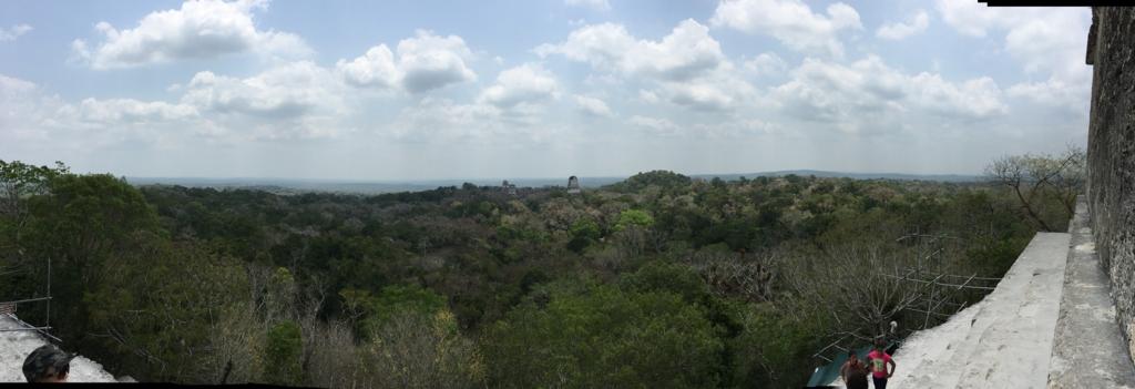 グアテマラ ティカル国立公園 4号神殿 頂上からジャングルの遺跡 パノラマ写真