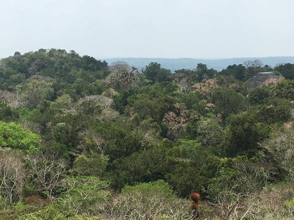 グアテマラ ティカル国立公園 4号神殿 頂上からジャングルの遺跡写真 失われた世界