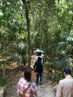 グアテマラ ティカル遺跡 4号神殿をあとにジャングルを進む