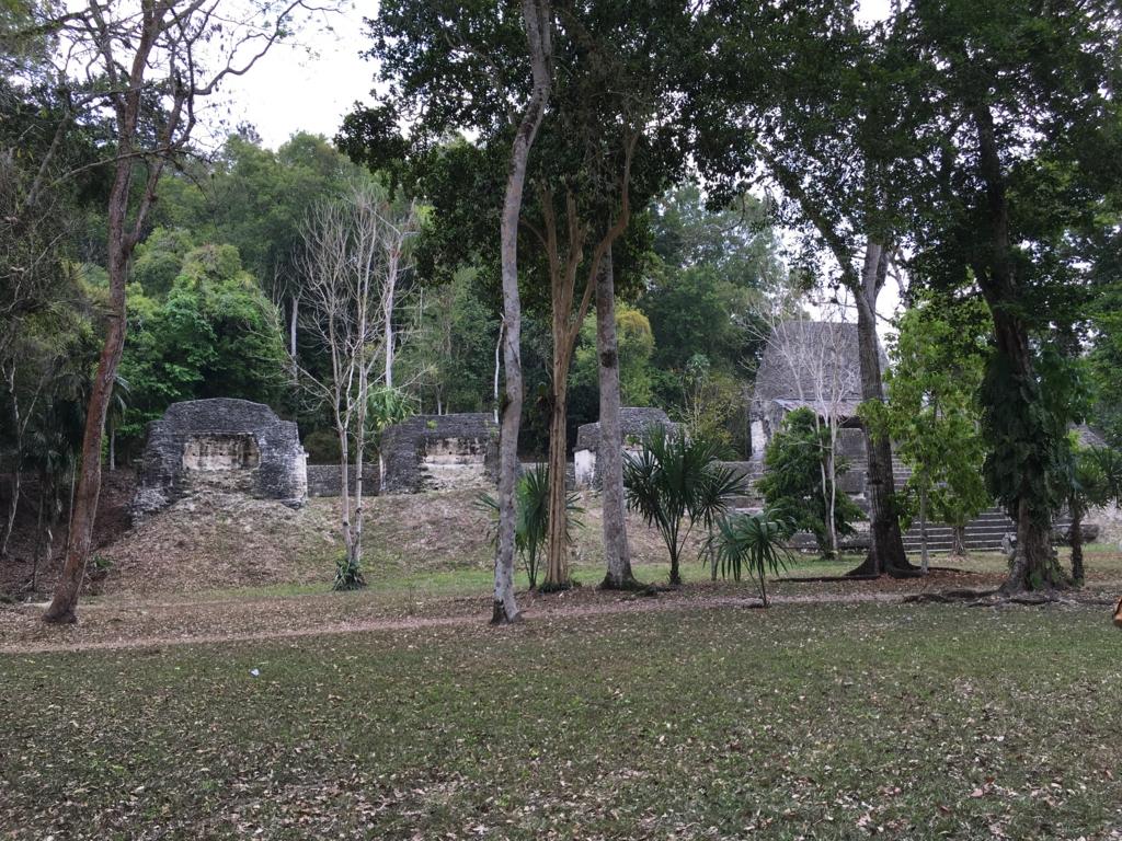 グアテマラ ティカル遺跡 「7つの神殿広場」 芝生