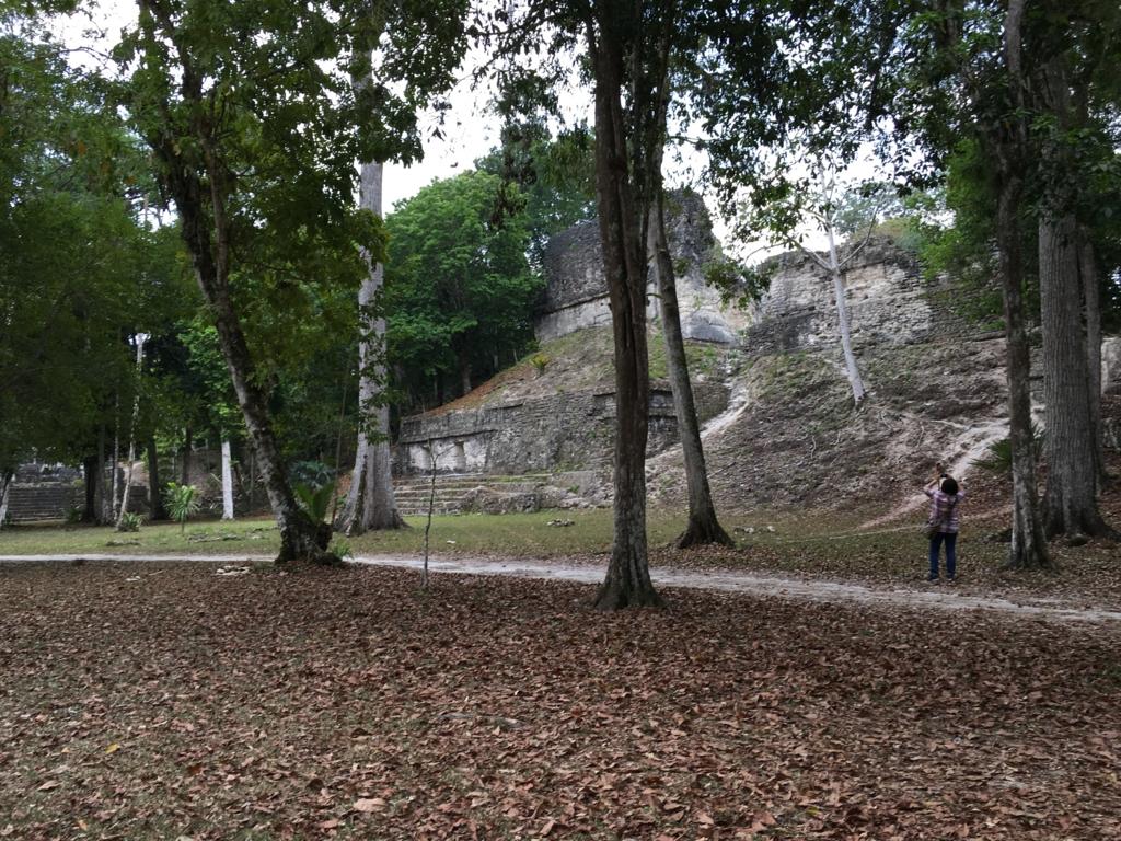 グアテマラ ティカル遺跡 「7つの神殿広場」 落ち葉