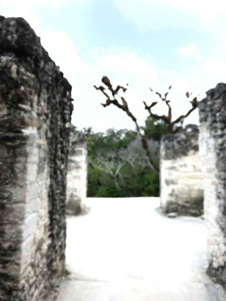 グアテマラ ティカル遺跡 「失われた世界」ピラミット 頂上からの神殿写真?