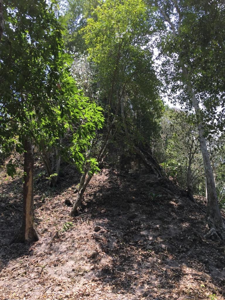 グアテマラ ティカル遺跡 「7つの神殿広場」付近の小山