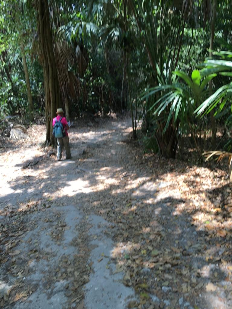 グアテマラ ティカル遺跡 「5号神殿」から「グランプラザ」へ