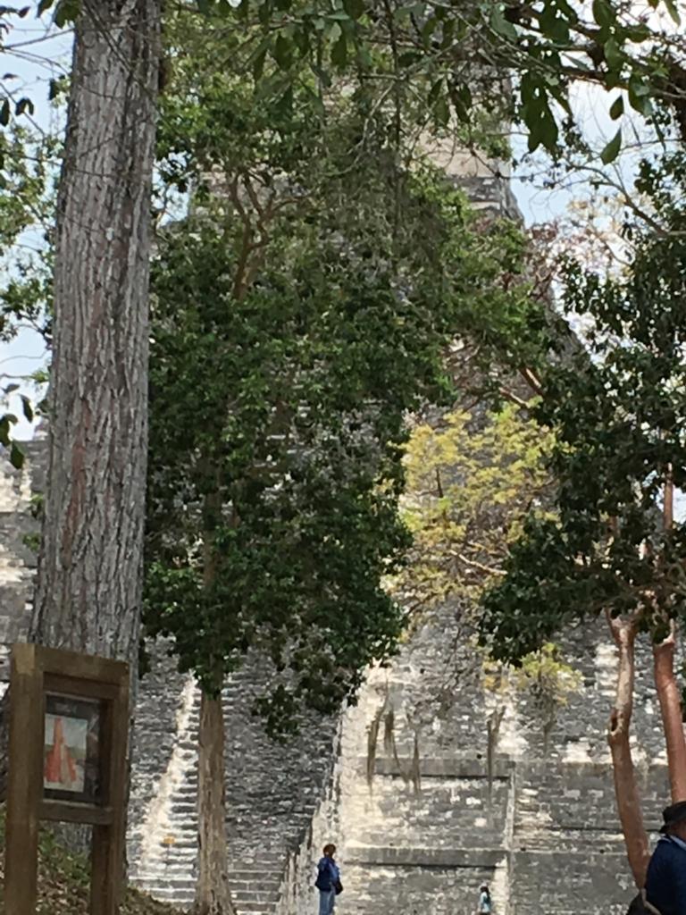 グアテマラ ティカル遺跡 「2号神殿」へ