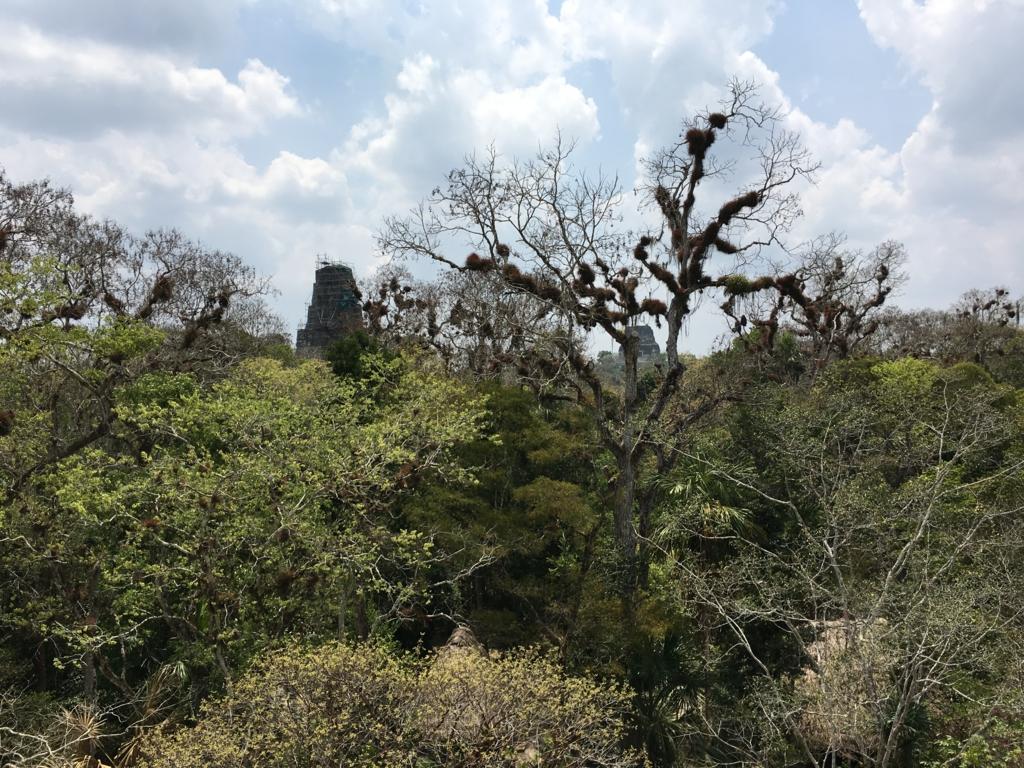 グアテマラ ティカル遺跡 「2号神殿」階段より 遠望に3,4号神