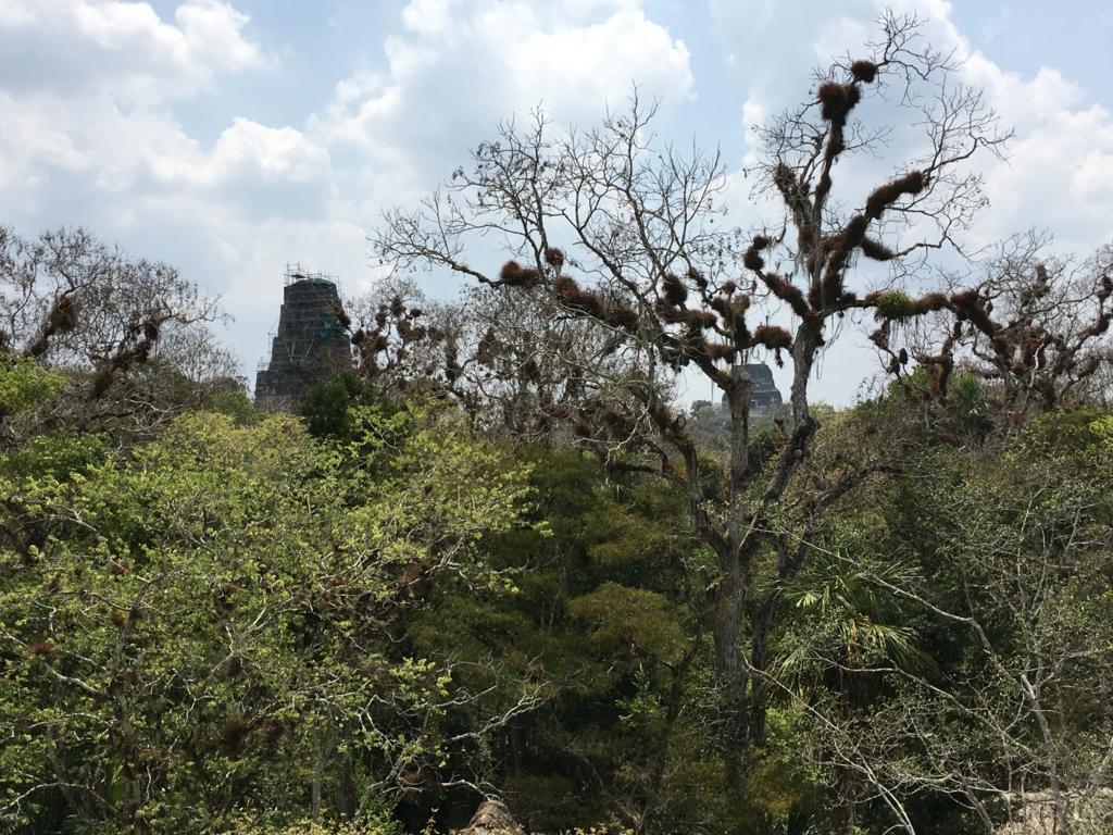 グアテマラ ティカル遺跡 「2号神殿」階段より 遠望に3,4号神 MAX拡大