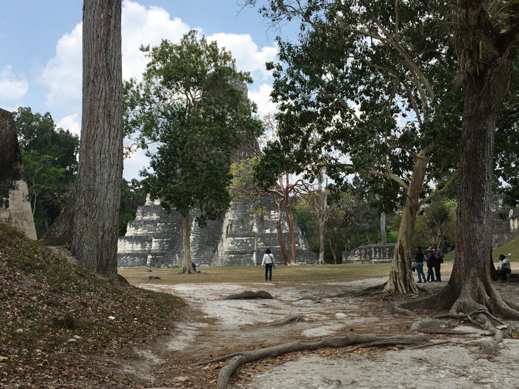 グアテマラ ティカル遺跡 「グランプラザ」広場へ