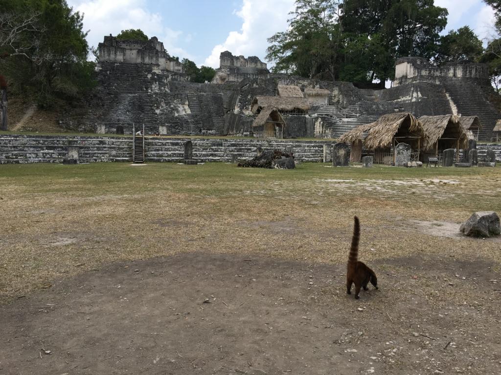 グアテマラ ティカル遺跡 ノースアクロポリス 広場から