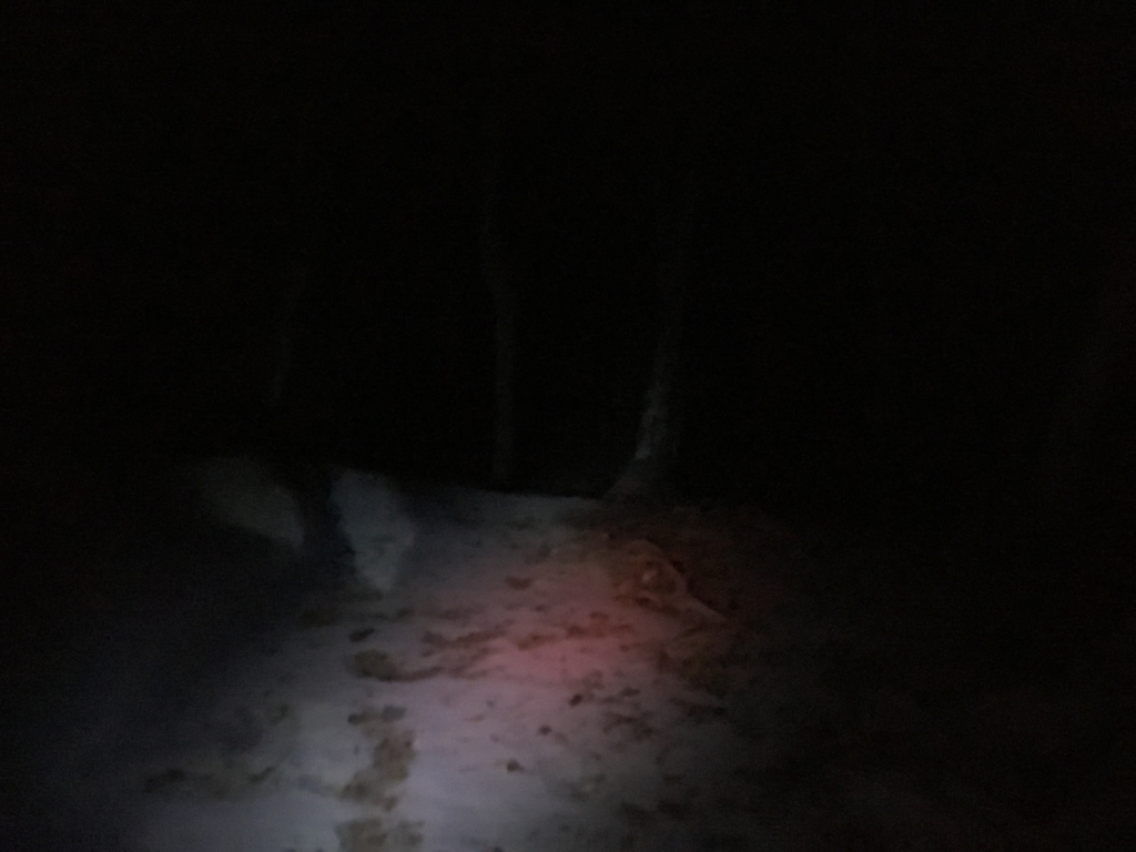 グアテマラ ティカル遺跡 深夜のジャングル