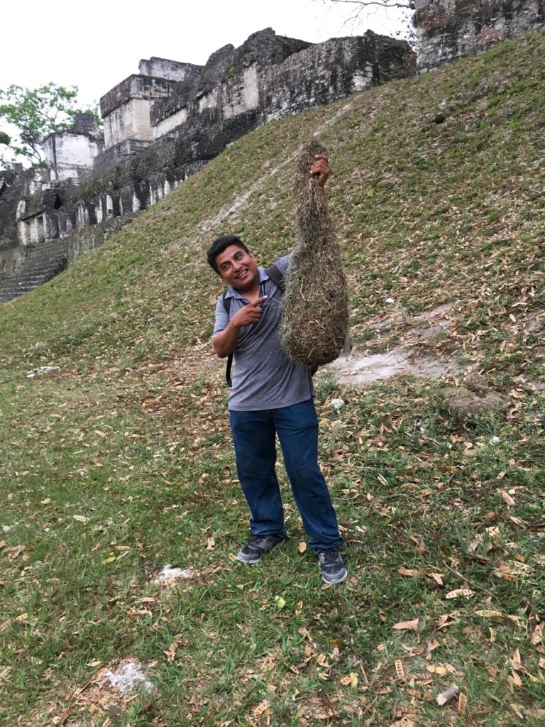 グアテマラ ティカル遺跡 鳥の巣をかかげるガイドさん width=
