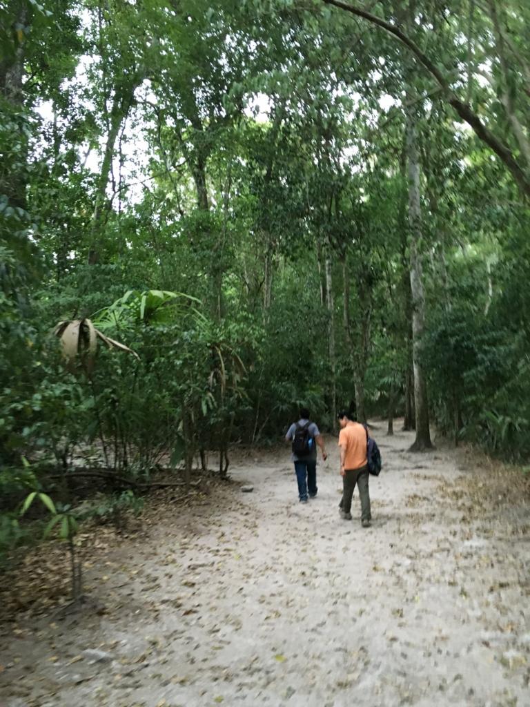グアテマラ ティカル遺跡 ジャングルの道