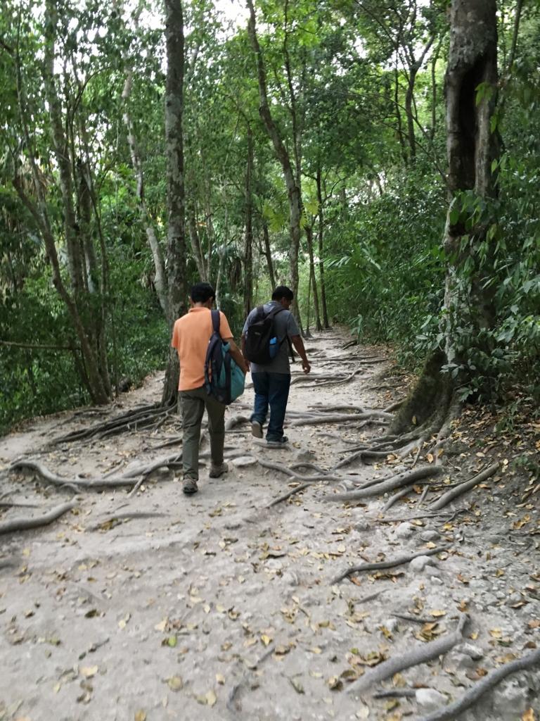 グアテマラ ティカル遺跡 ジャングル 熊野古道のような道