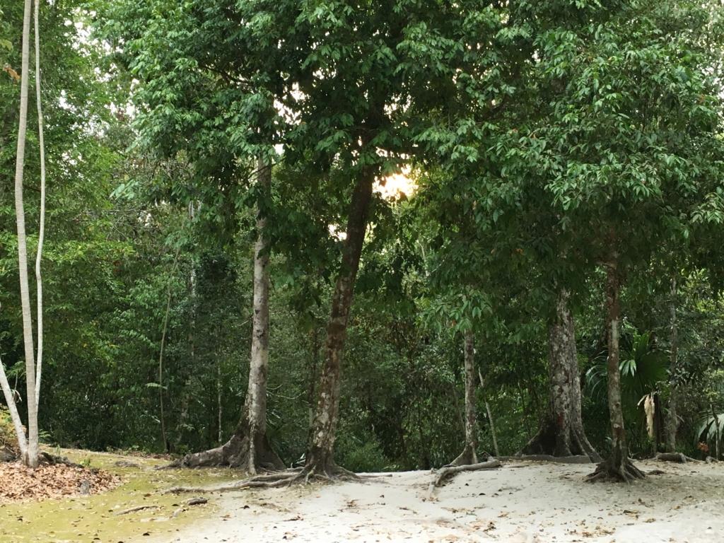 グアテマラ ティカル遺跡 ジャングル 朝日の木漏れ日