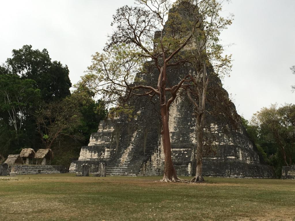 グアテマラ ティカル遺跡 1号神殿の側の木にクモザル