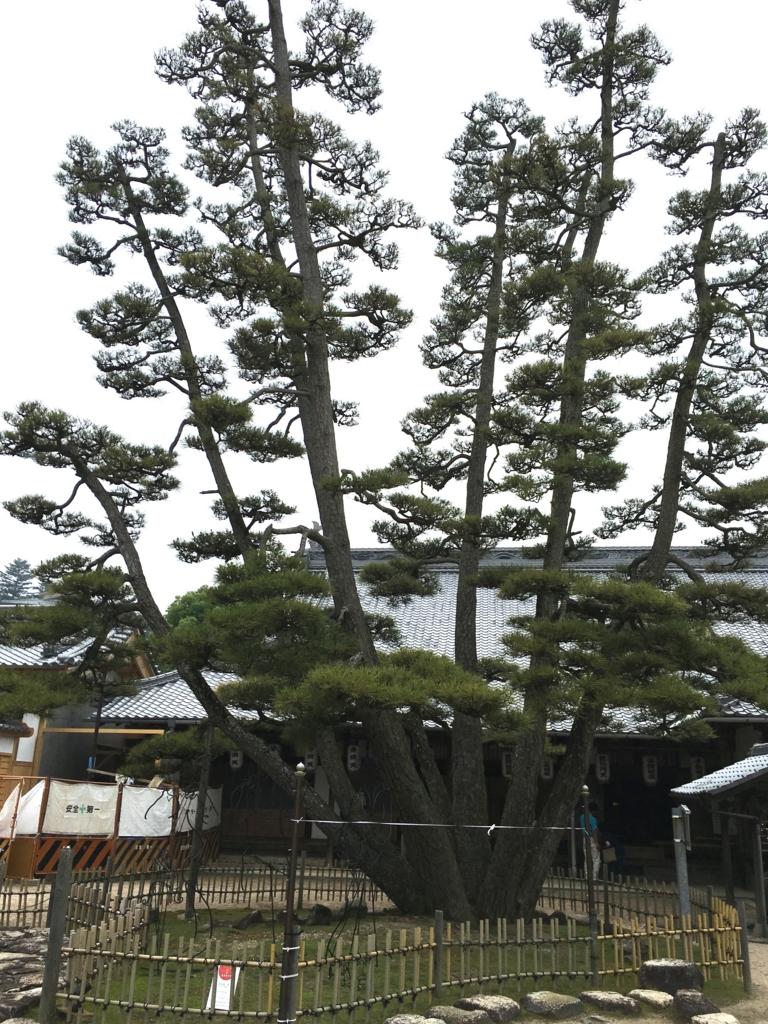 厳島神社 大願寺 9本松