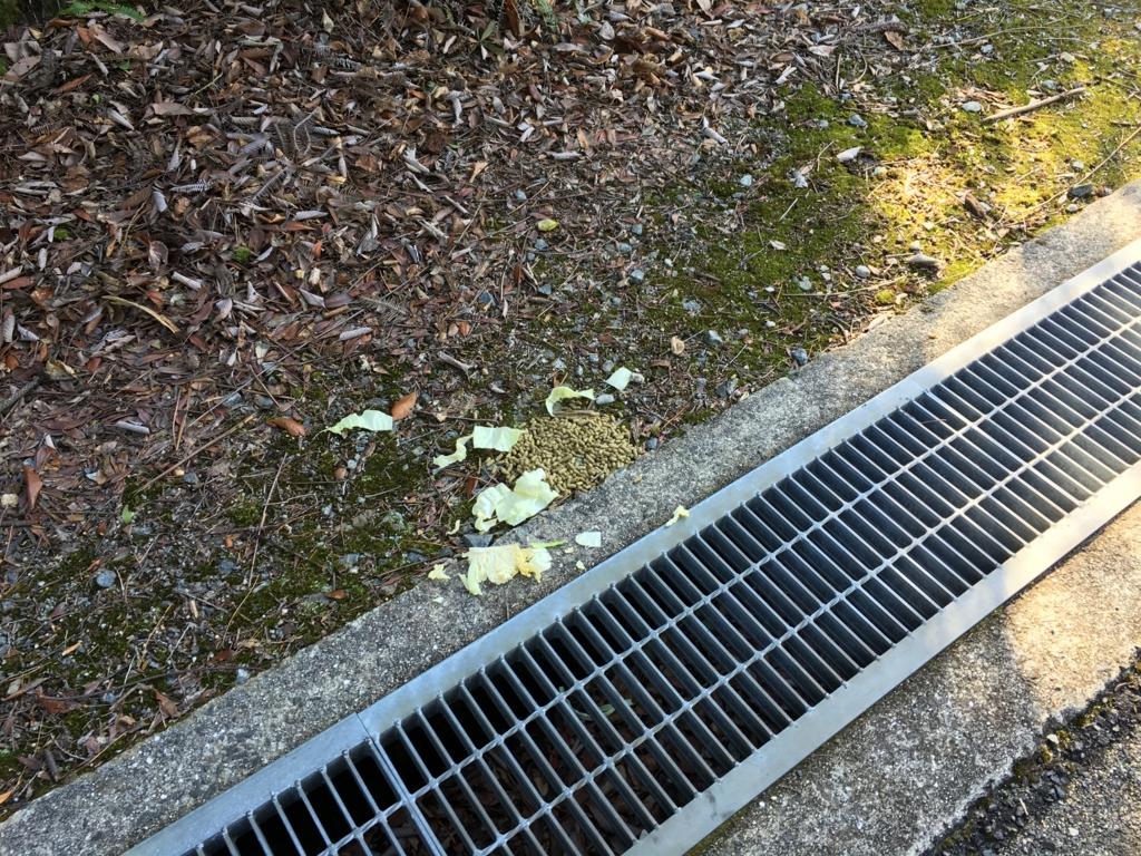 2回目のうさぎ島(大久野島) 食べ残されたキャベツ