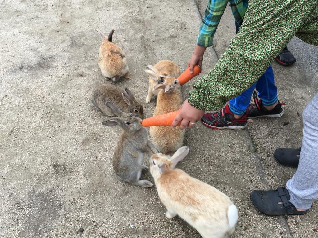 2回目のうさぎ島 「休暇村 大久野島」朝のお散歩会 広場のウサギさん達