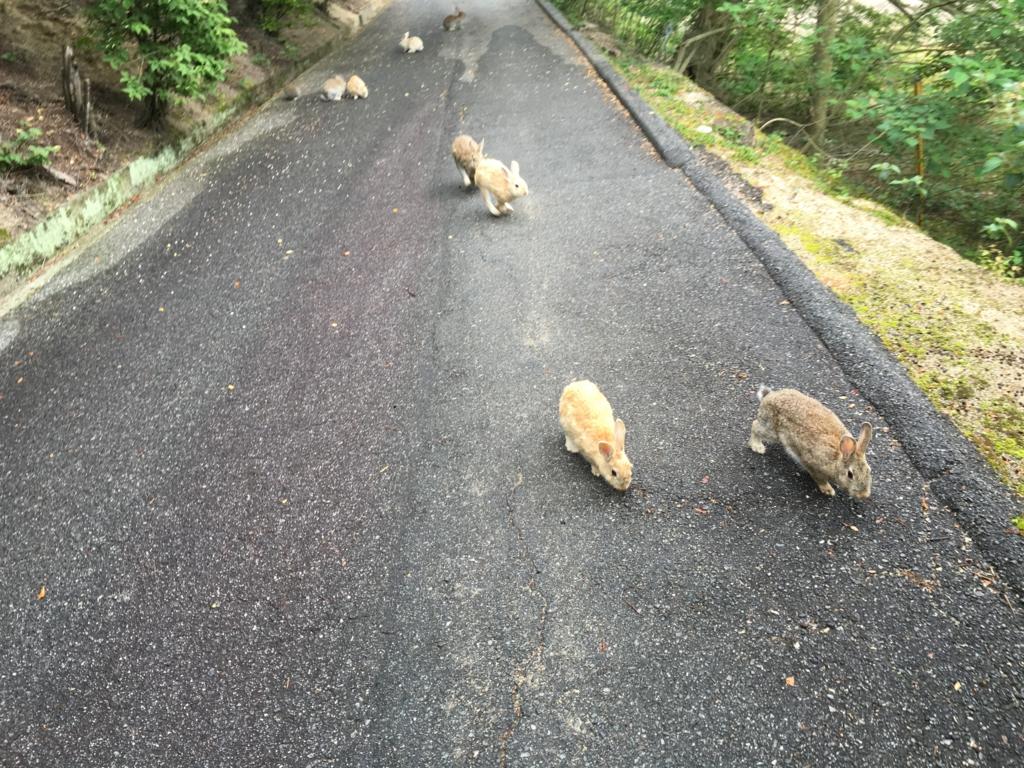 2回目のうさぎ島 大久野島 展望台へ 上り坂付近のウサギさん達