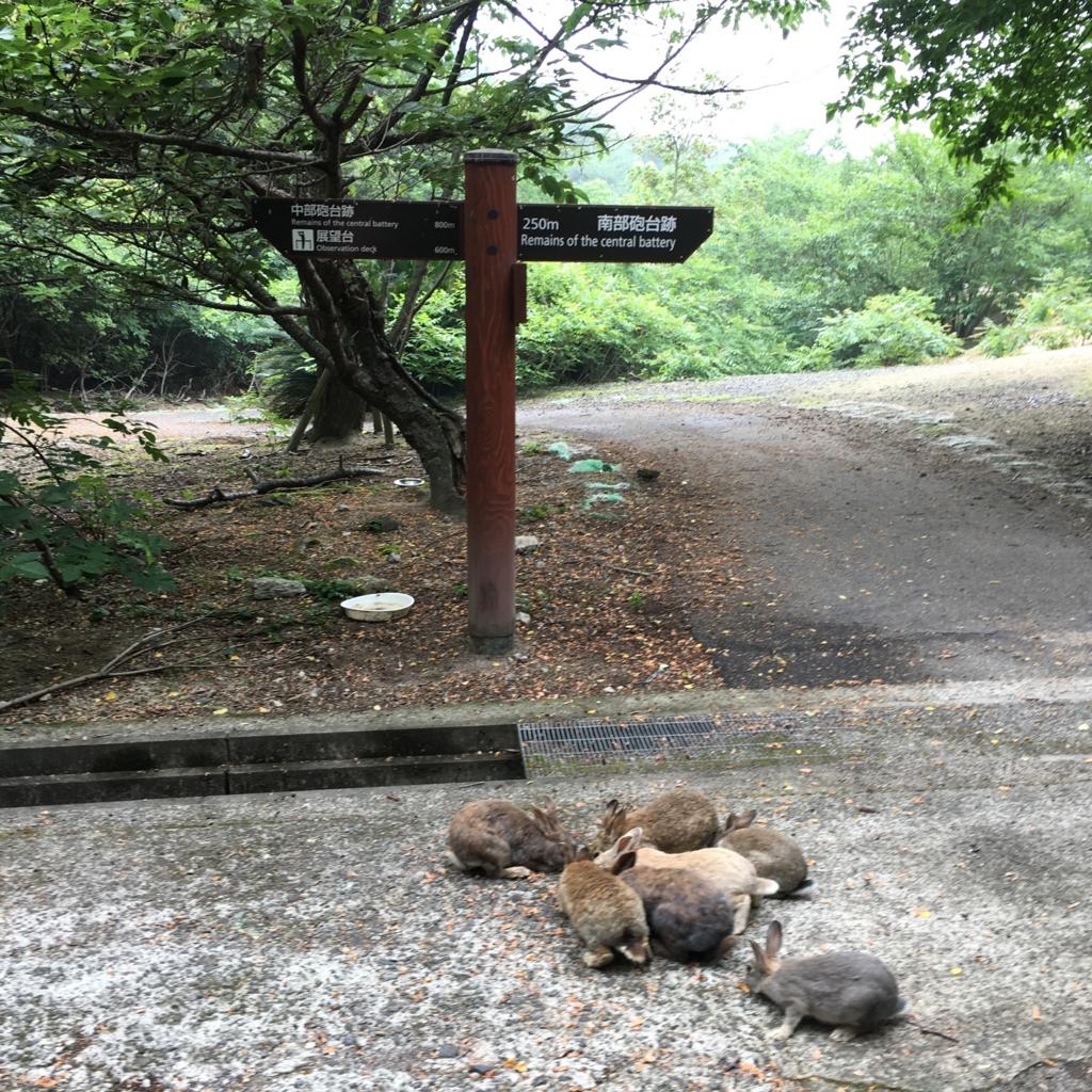 2回目のうさぎ島 大久野島 展望台へ 行き先看板付近のウサギさん達