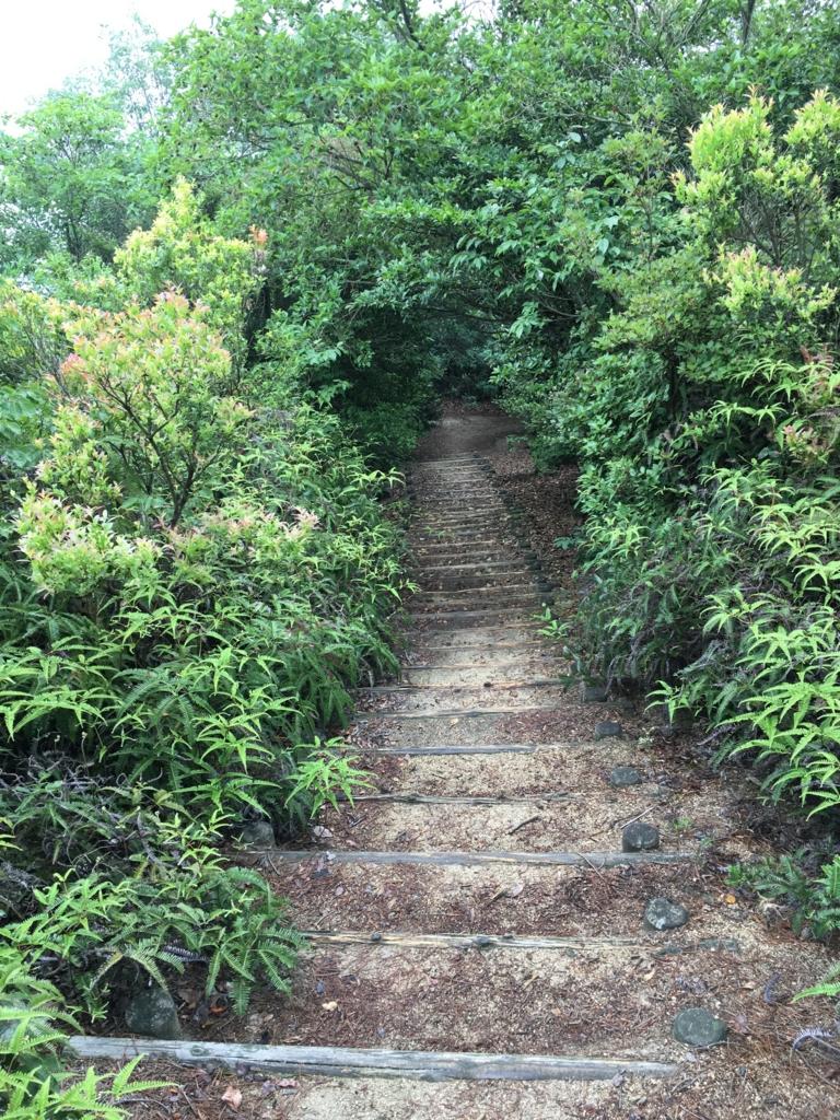 2回目のうさぎ島 大久野島 展望台へ 階段登りきったところ