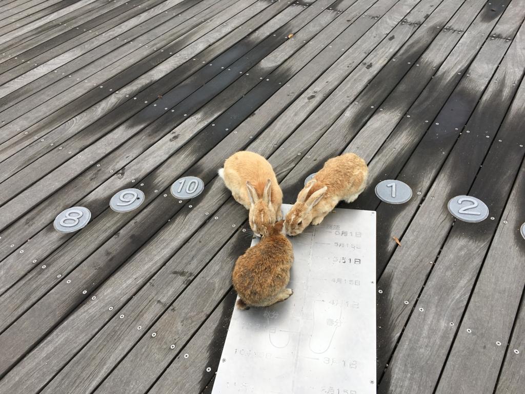 2回目のうさぎ島 大久野島 展望台のウサギさん達