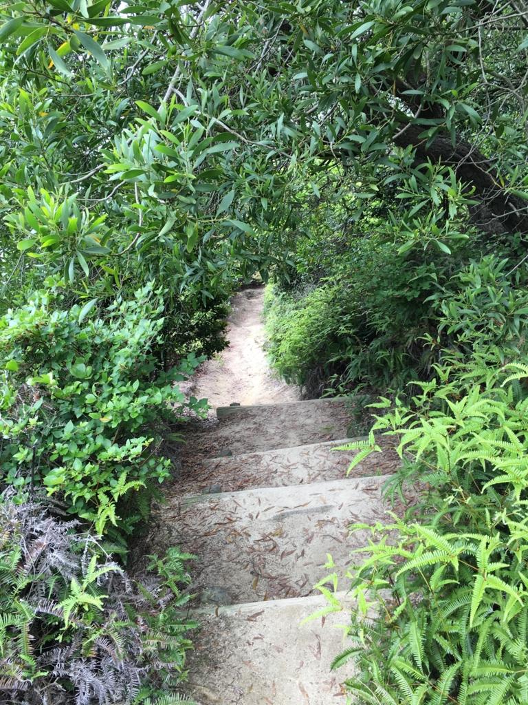 2回目のうさぎ島 大久野島 展望台より グラウンド方面下り坂 狭くなってきた道