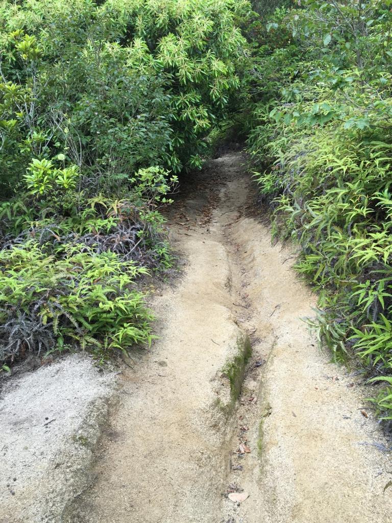 2回目のうさぎ島 大久野島 展望台より グラウンド方面下り坂 雨水の通り道が道