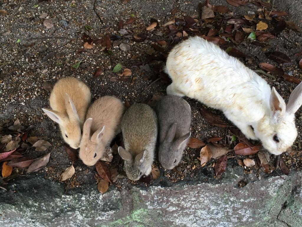 2回目のうさぎ島 大久野島 神社付近 小さなウサギさん達