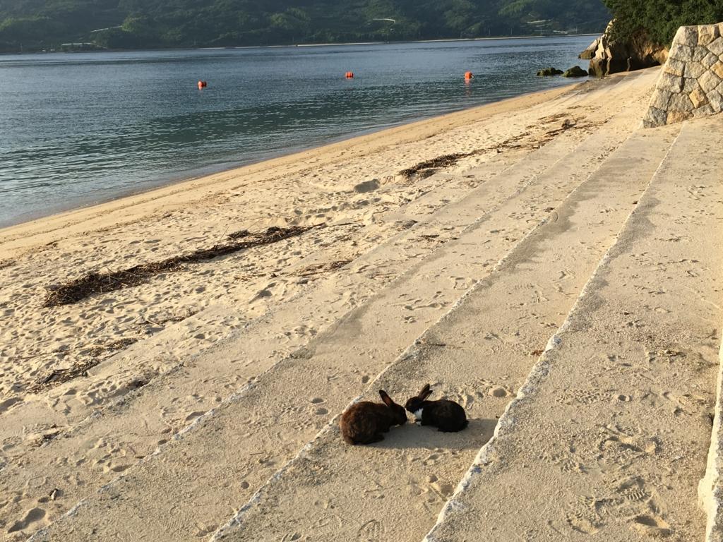 うさぎ島(大久野島)早朝 海水浴場