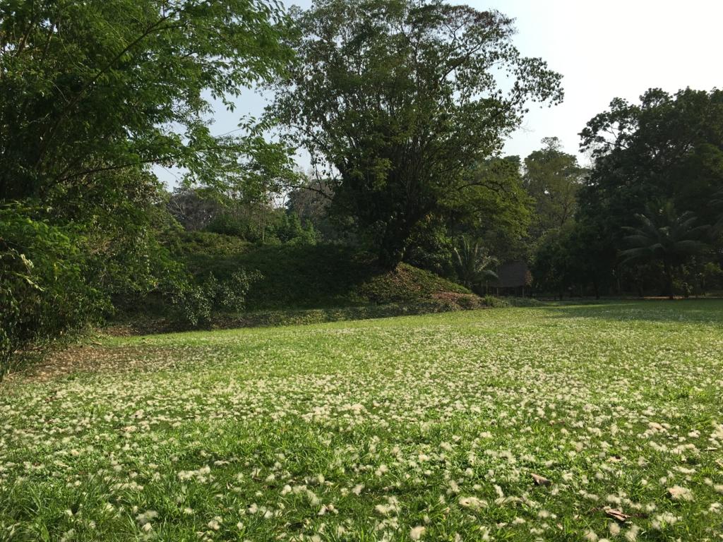 グアテマラ キリグア遺跡 広場の芝生の上にも たくさんのフワフワ〜