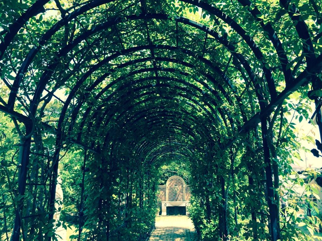 「キングスウェル」花のトンネル内