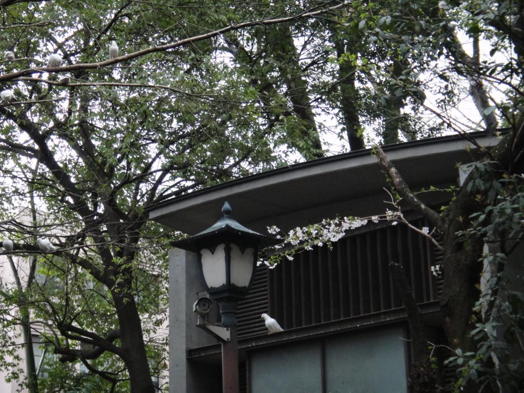 はとバス 定期観光「ゆったり東京めぐり」靖国神社(白鳩鳩舎)