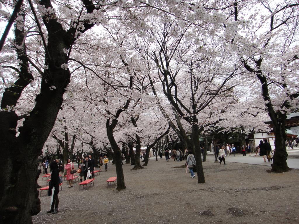 はとバス 定期観光「ゆったり東京めぐり」靖国神社(桜)