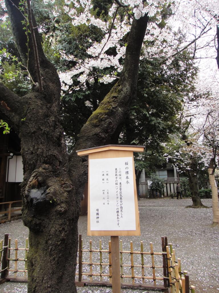 はとバス 定期観光「ゆったり東京めぐり」靖国神社(桜の標準木)
