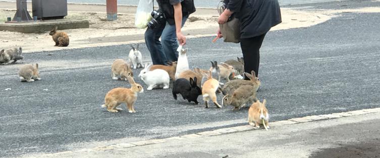 うさぎ島(大久野島)道路えは、餌やり禁止です
