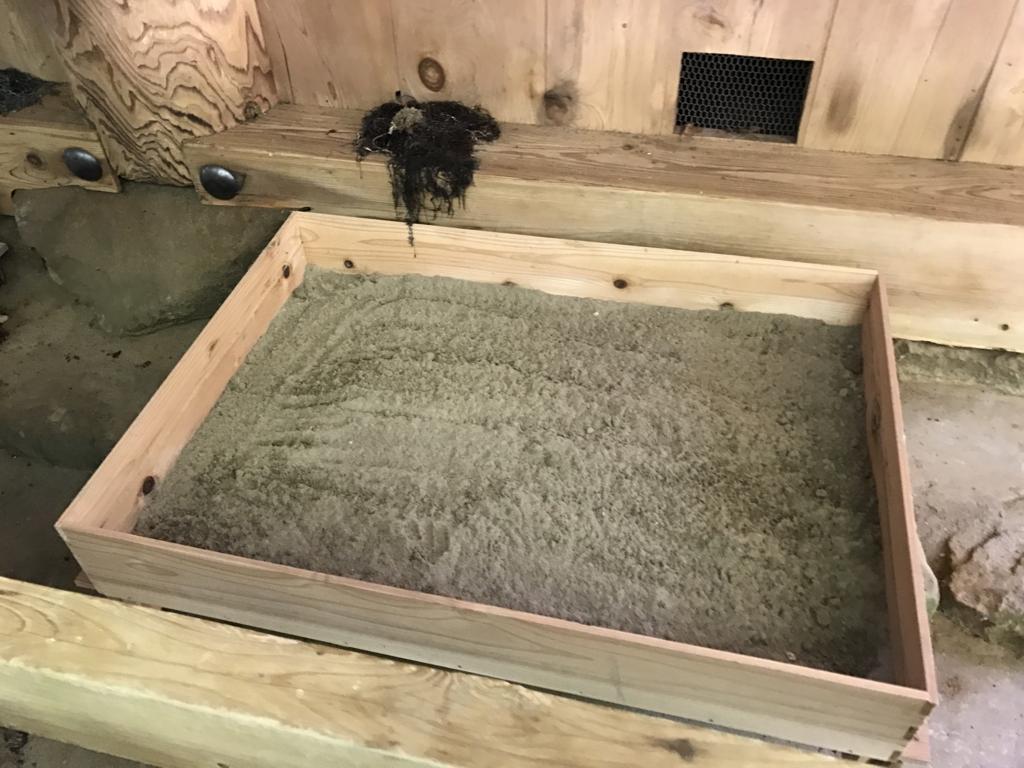 「出雲大社」素鵞社(そがのやしろ)砂、海藻 供え