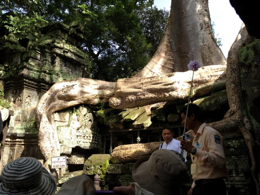 カンボジア シェムリアップ 「タ プローム」遺跡 浸食した巨木の根