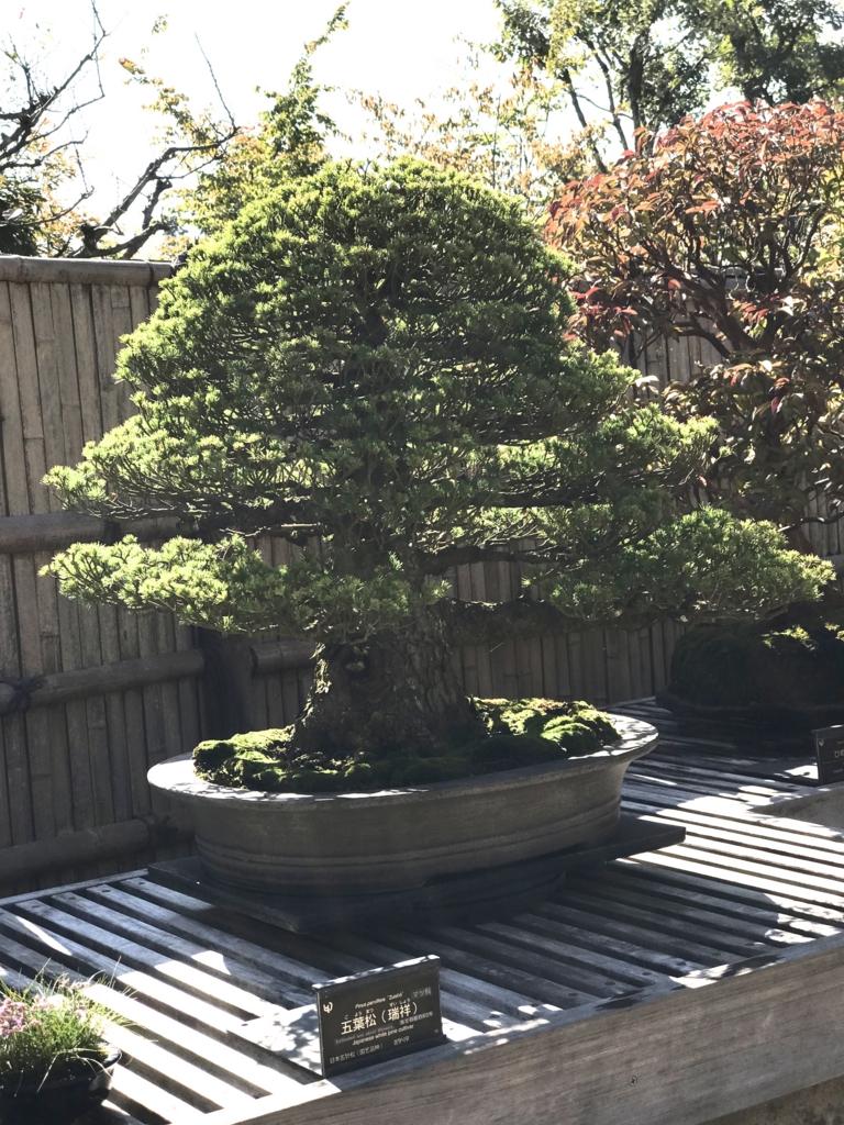 昭和記念公園 盆栽苑 盆栽