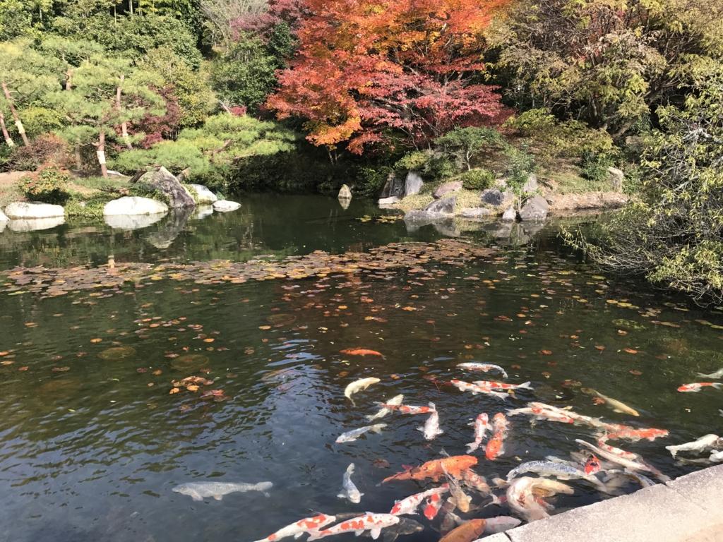 広島県 三景園 里の池