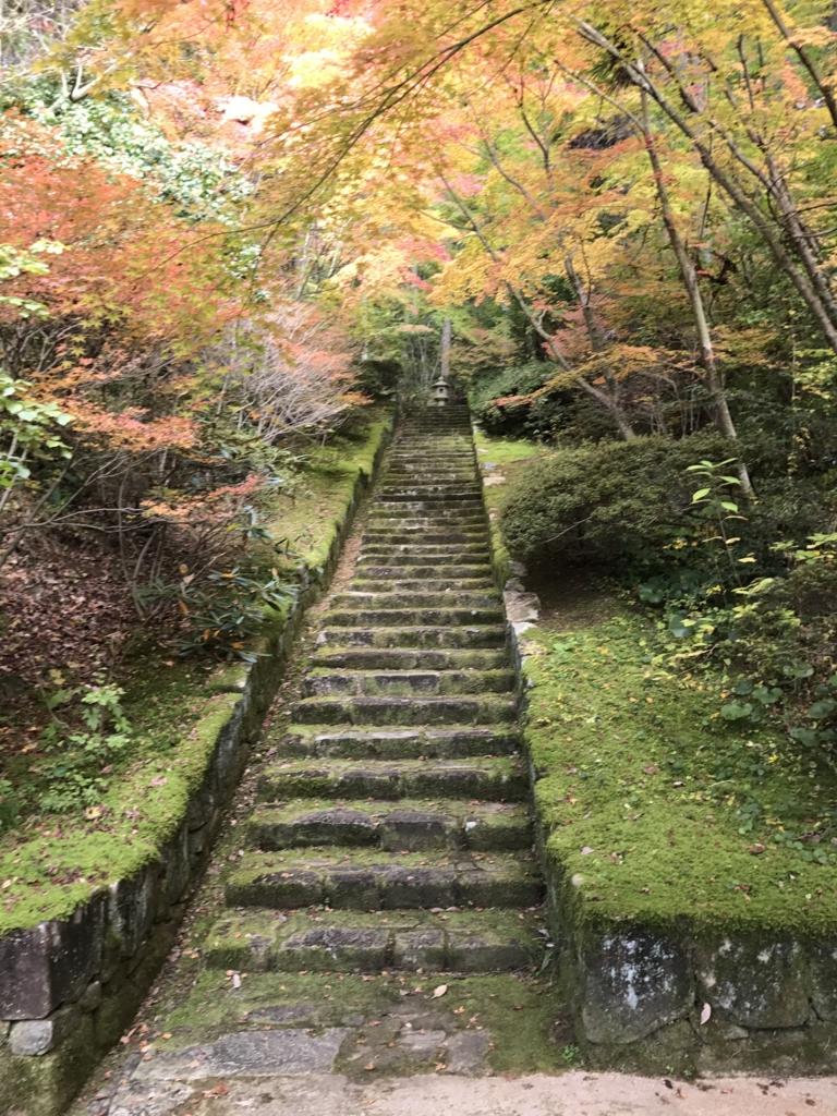 広島県 三景園 紅葉の階段