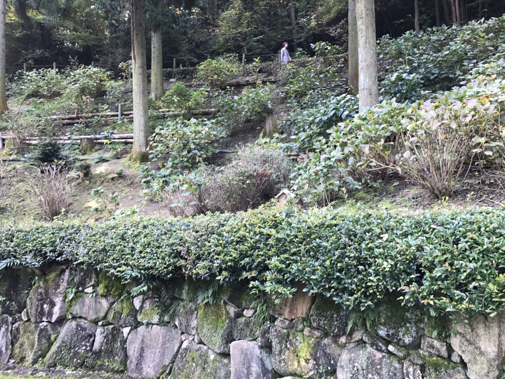 広島県 三景園 あじさい園 たくさんの紫陽花